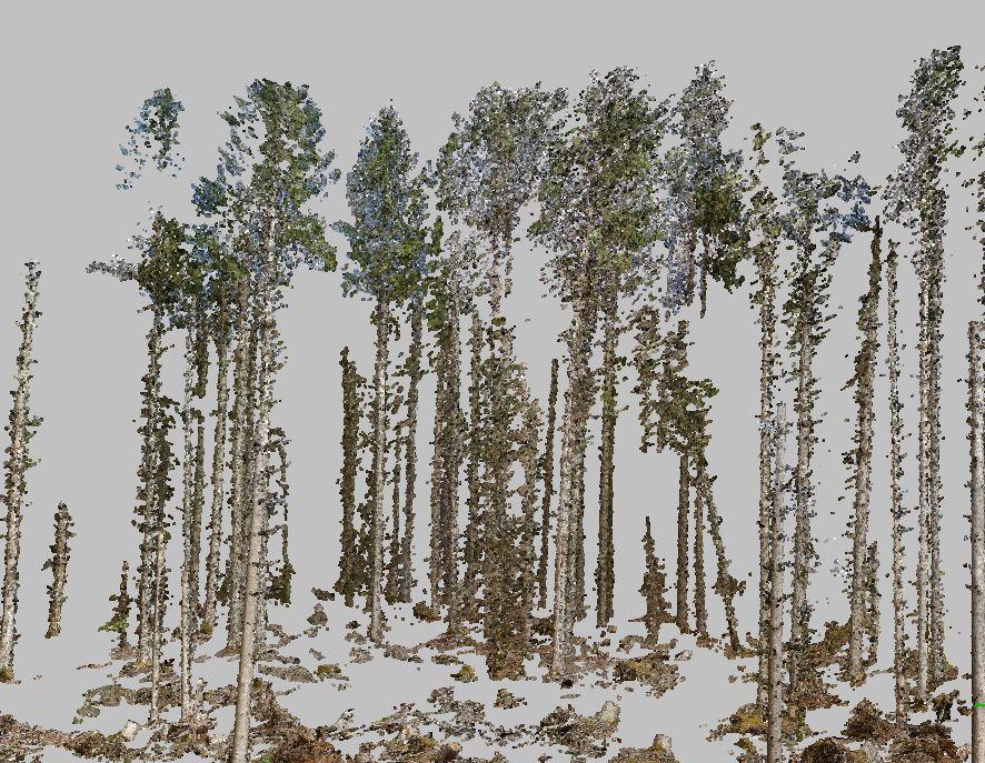 3D Punktwolke eines Waldgebiets