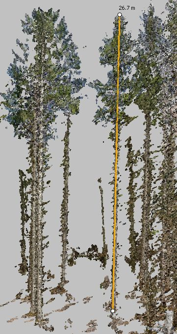 Messen der Baumhöhe in der Punktwolke